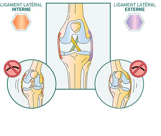 Les ligaments du genou - Dr Mylle, chirurgien orthopédiste à Paris
