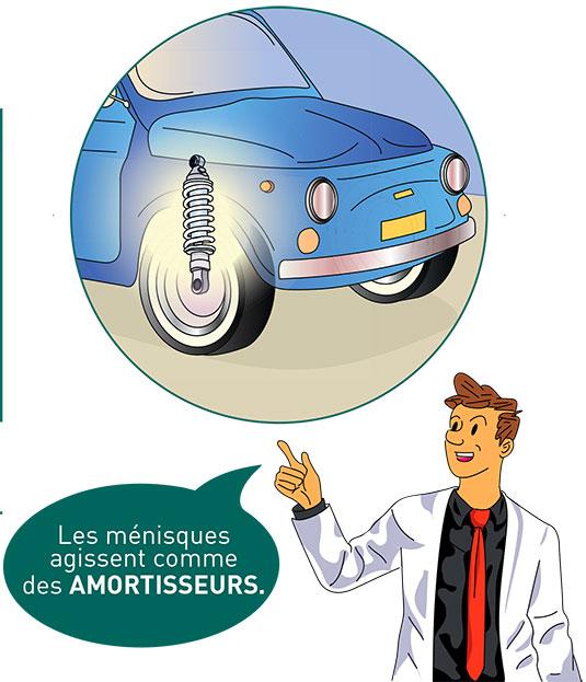 Les ménisques - Dr Mylle, chirurgien orthopédiste à Paris